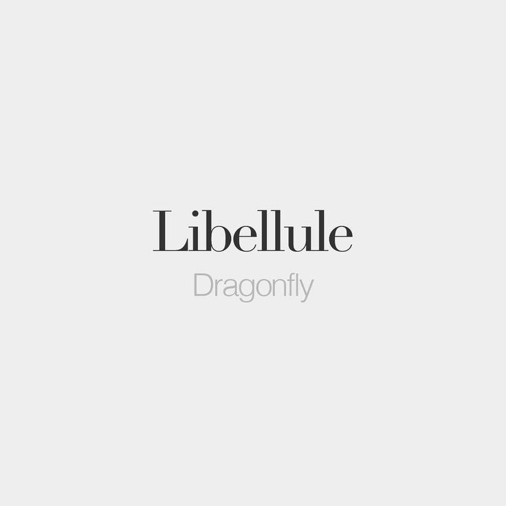bonjourfrenchwords: Libellule (female phrase) | Dragonfly | /li.be.lyl/