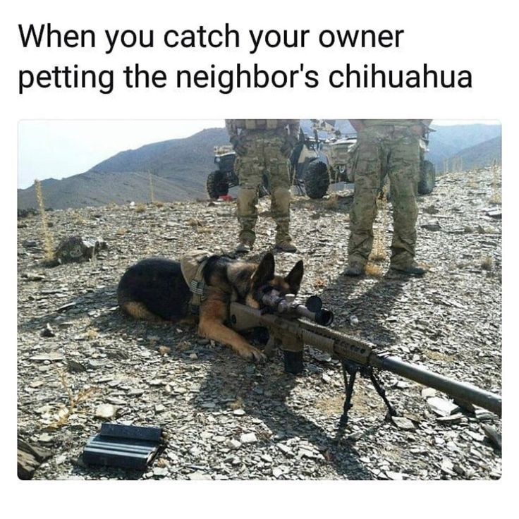 Pin on Dog humor