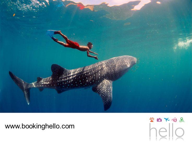 LGBT ALL INCLUSIVE AL CARIBE. Viajar al Caribe mexicano es una gran oportunidad, para disfrutar de sus diferentes paisajes y qué mejor que hacerlo acompañado de tu pareja. Entre la variedad de actividades que podrás hacer, se encuentran el snorkeling en Cozumel, el buceo en Isla Mujeres y hasta el nado con tiburones ballena en Holbox. En Booking Hello te invitamos a adquirir tu pack all inclusive, para que asegures tu alojamiento y vivas al máximo tus vacaciones. #LGBTalcaribe