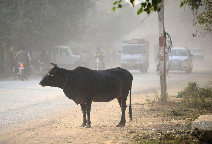 #Muslim man #dies after attack by #cow #vigilantes in #India...