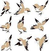 Silueta Aves Imágenes De Archivo, Vectores, Silueta Aves Fotos Libres De Derechos