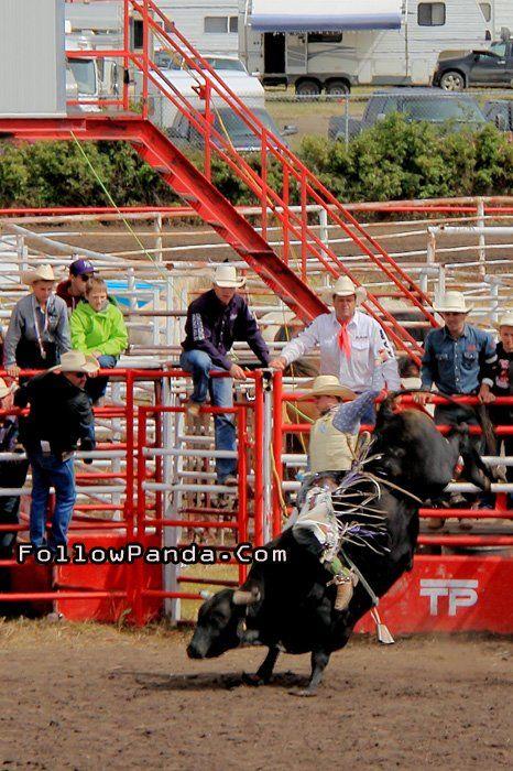 Bull Riding at Teepee Creek Stampede Rodeo Event - County of Grande Prairie, Alberta, Canada | FollowPanda.Com