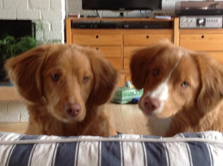 Jolly en haar zusje Lilly 6 maanden oud.