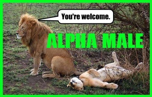 Alpha Male for kvinner som elsker menn.  Oppdag hemmelighetene i denne videoen gave, klikk her >>> https://www.youtube.com/watch?v=c5D5PpZ3XFA  I denne videoen vil du lære hemmelighetene, helt  gave... #macho #hot #rico #sexy #sex #muscle