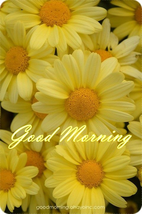 Have a beautifulday, good morning. | Good morning