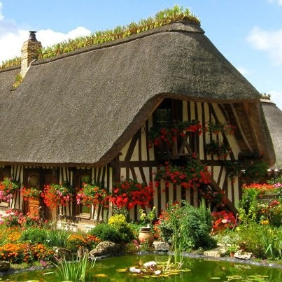 This is a Chaumière (cottage) near Rouen in France. Traditionally the thatched roof is topped with a bed of clay where iris are planted. The roots, or rather rhizomes, of the iris helps to mesh together the reed ends in the thatch and remov  e excess moisture from the ridge. Normandy chaumière often have a flint foundation with half-timbered walls with torchis (French cob) [http://fr.wikipedia.org/wiki/Torchis] on laths (wattle) as the infill.