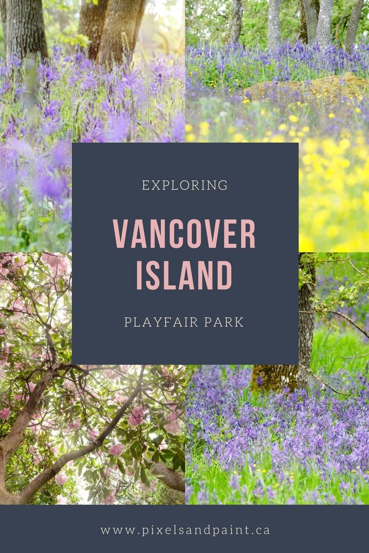 One of Victoria's best kept secrets - beautiful Playfair Park is the perfect spot to go to see one of the most threatened ecosystems in Canada - the Garry Oak meadow. Its also home to amazing rhododendron and azalea displays in the spring.