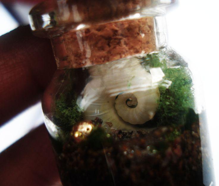 Wish bottle #Terrarium, Mini Terrarium, #WishbottleNecklace, mini botanical, wish bottle jewellery, terrarium jewellery, seashell necklace by DreamADesign on Etsy