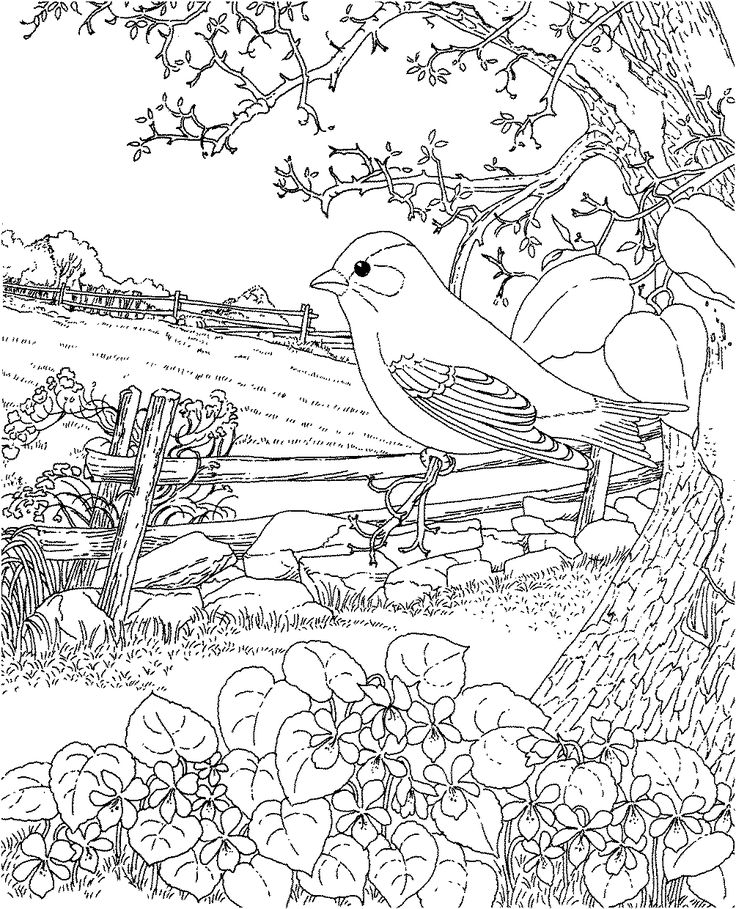 Goldfinch And Blue Violet New Jersey State Bird Coloring Page From Category Select 24848 Printable Crafts Of Cartoons Nature Animals