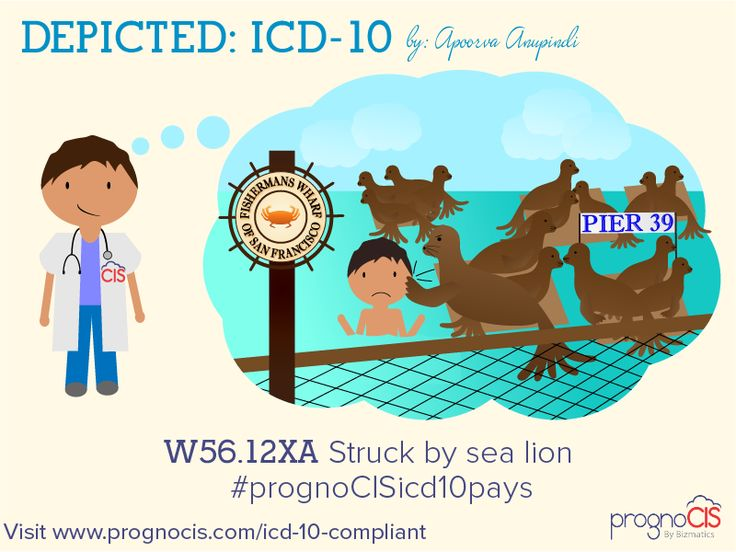 Swimming at Fisherman's Wharf? ICD-10 Humor: Struck by sea lion
