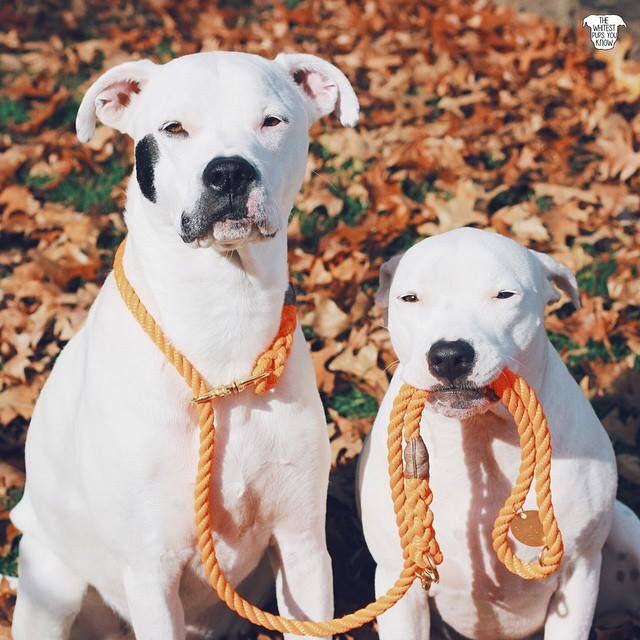 Best Dogo Chubby Adorable Dog - 107aace78765bd8756f4fca0e871c991--timeline-photos-cute-dogs  Image_605436  .jpg