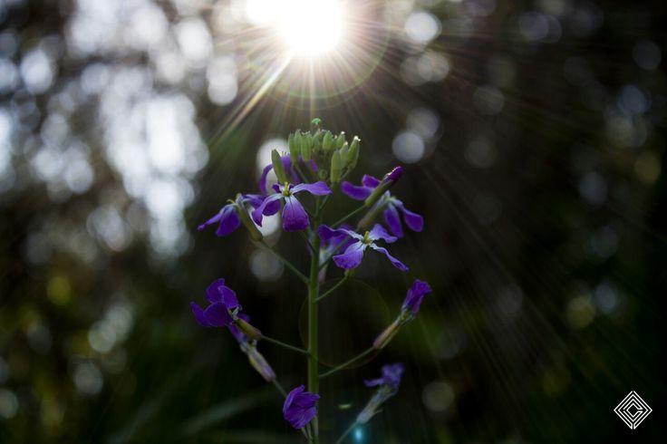 Cleytdesign - sol y flor