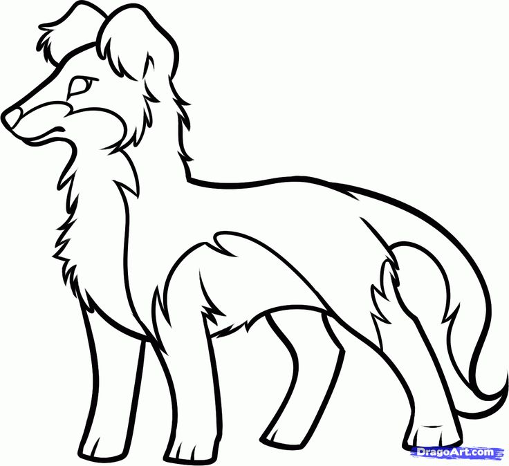 Draw a Border Collie, Step by Step, Drawing Sheets, Added