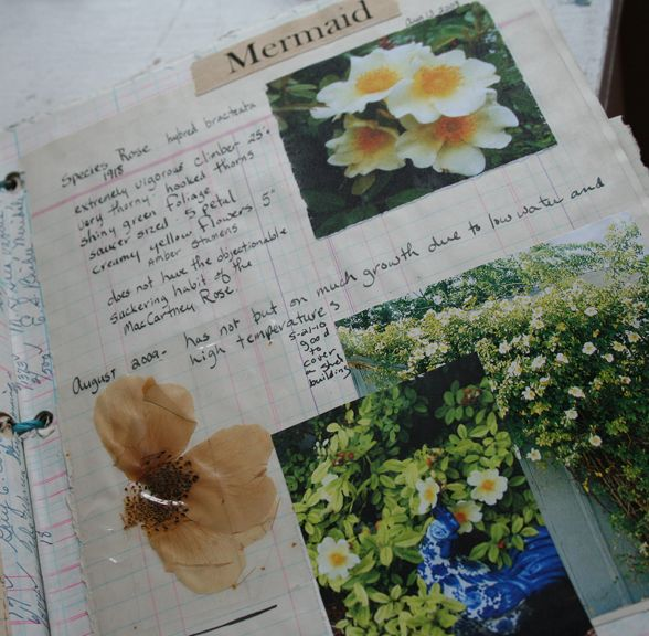 Art journal inspiration. Rambling Rose. Typepad blog. Rose garden journal notebook mermaid