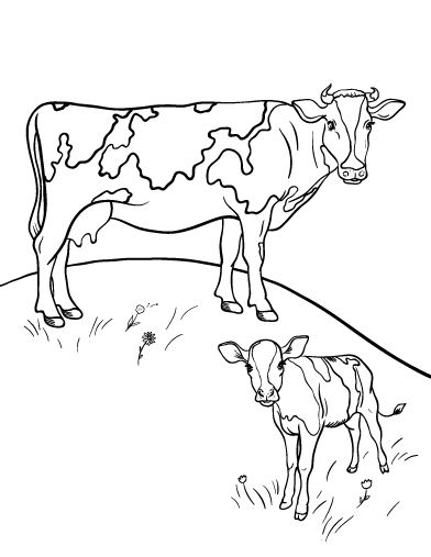 Printable Cow Coloring Page Free PDF Download At Coloringcafe