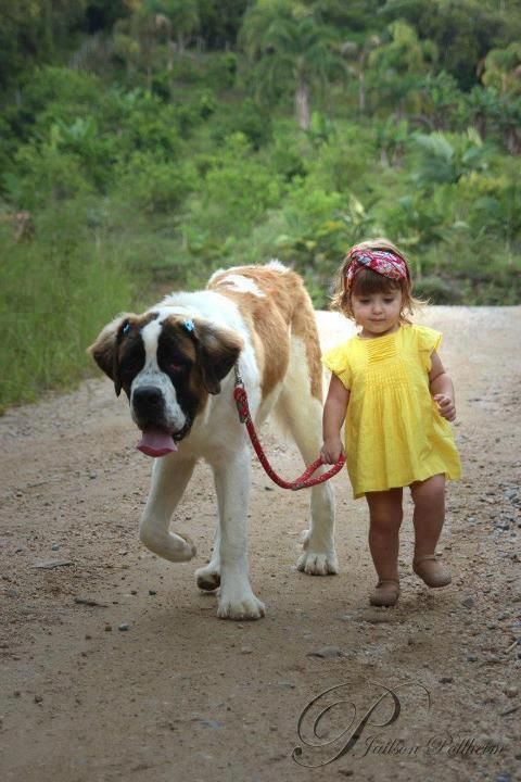 . . . I Loved Growing Up With My Saint Bernard Tiny . . I Want My Girls To Have That Experience Too .