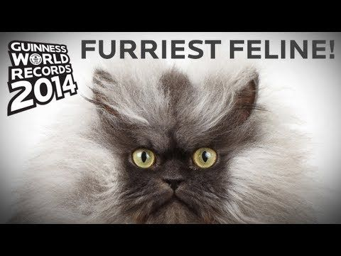 rip colonel meow longest fur on a cat guinness world records 2014