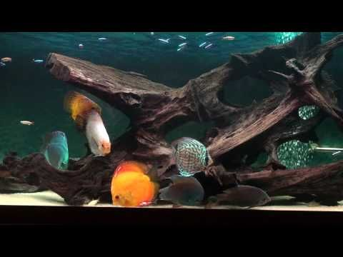 17 best images about my dream aquarium ideas on pinterest for Dream of fish tank