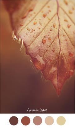 AUTUMN LEAVE - Kleurenpalet bruin / rood. Herfstblad - najaar - bruin tinten