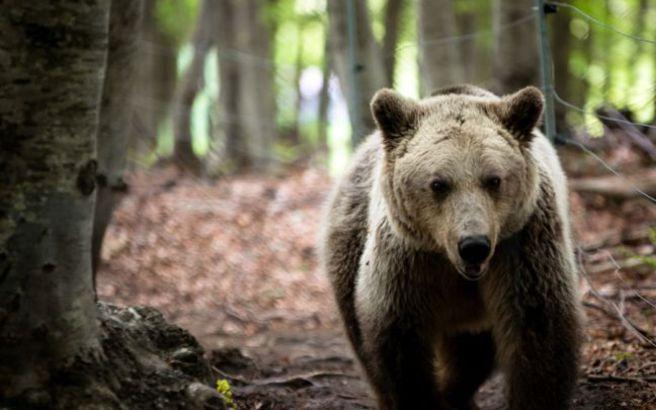 Αρκούδες λυμαίνονται τα… νεκροταφεία μιας πόλης στην Άπω Ανατολή