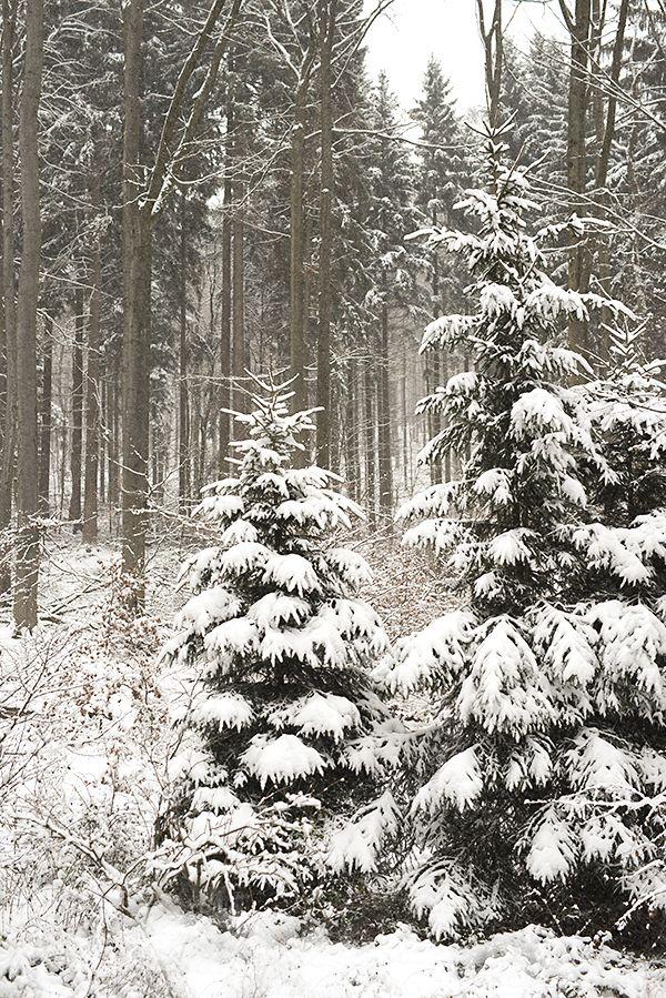 245 besten Winter Bilder auf Pinterest   Winterlandschaft ...