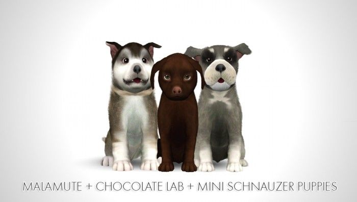 Alaskan Malamute + Chocolate Labrador + Miniature Schnauzer Puppies by morganabananasims - Sims 3 Downloads CC Caboodle