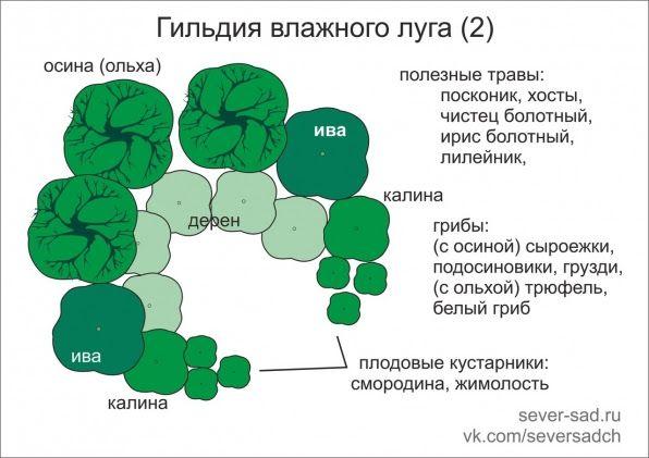 Гильдии растений. Гильдия влажного луга — Веда-дом