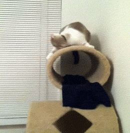 So, my cat listens to metal… (gif)