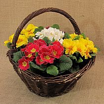 DIY rosną kwiaty fioletowe majsterkowiczów | UsefulDIY.…