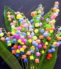 100 sztuk/worek Bell Orchidea bonsai nasiona Kwiatów Nasiona Kwiat Campanula 9 kolory Convallaria Nasion roślin doniczkowych dla domu ogród(China (Mainland))