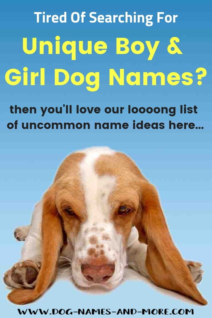 Unique Dog Names Helpful Guide To Finding The Best Name Dog