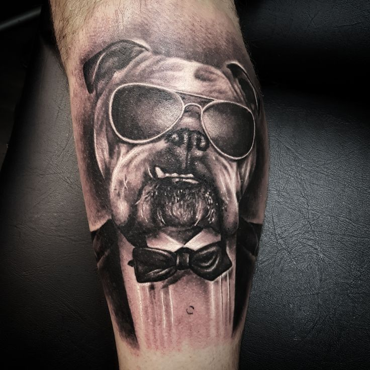 Bulldog tattoo by Thomas Sidney Birchall @ Soular Tattoo - Christchurch - NZ