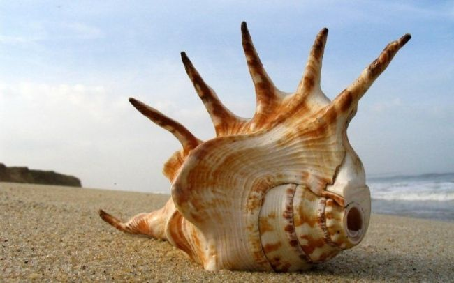reach for the sky: Beaches, Sea Shells, Spiders, Amazing Natural, Natural Pictures, Beautiful, Wallpapers, Seashells, Photo