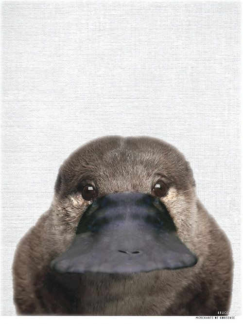Aussie Animal Print – BRUCE the Platypus – Velez