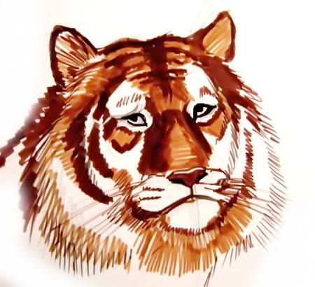 Tiger face drawing