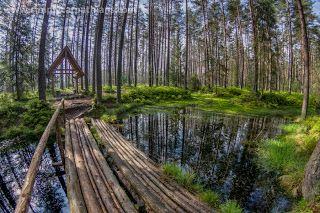 through geographer's eyes: Nature Reserve - Bór na Czerwonem