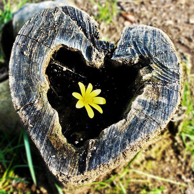 ❤️ Coração natural ❤️ Natural heart #natureza #nature