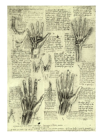Functions of the Human Hand *DA VINCIApartments Stuff, Famous Artists, Art Prints, Allposters Com, Leonardo Da Vinci, Human Hands, Davinci, Leonardo Drawing, 500 000 Posters
