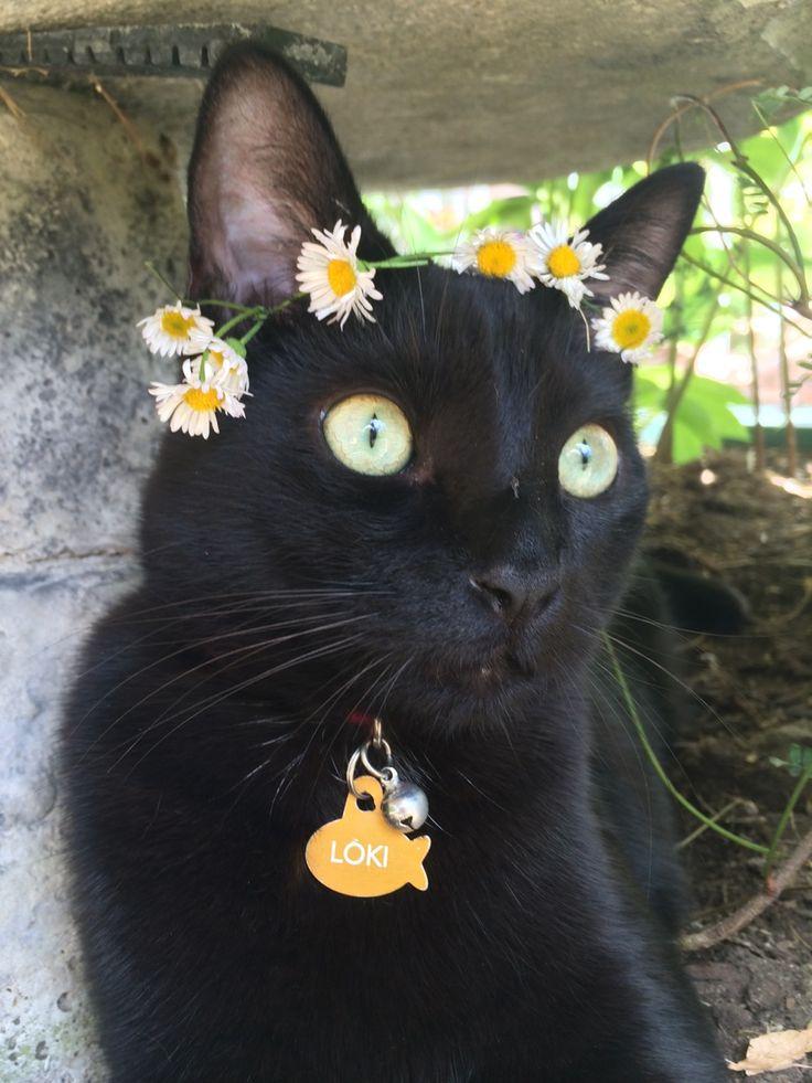 Kitty god