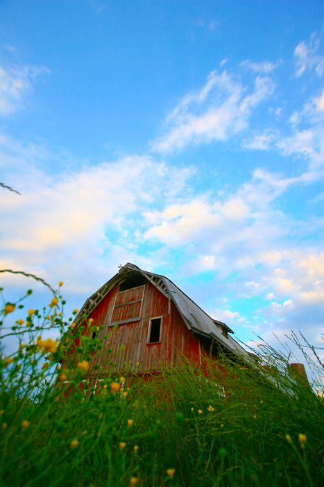 barns hold so much life in them