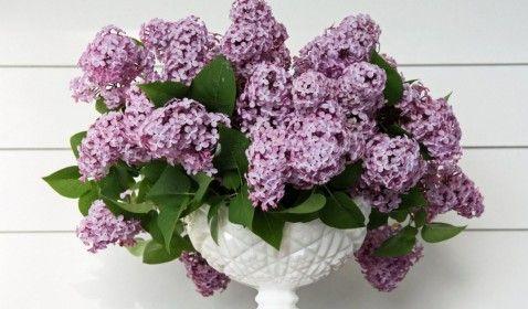 kvetinové, orgován, váza, jarná , listyu