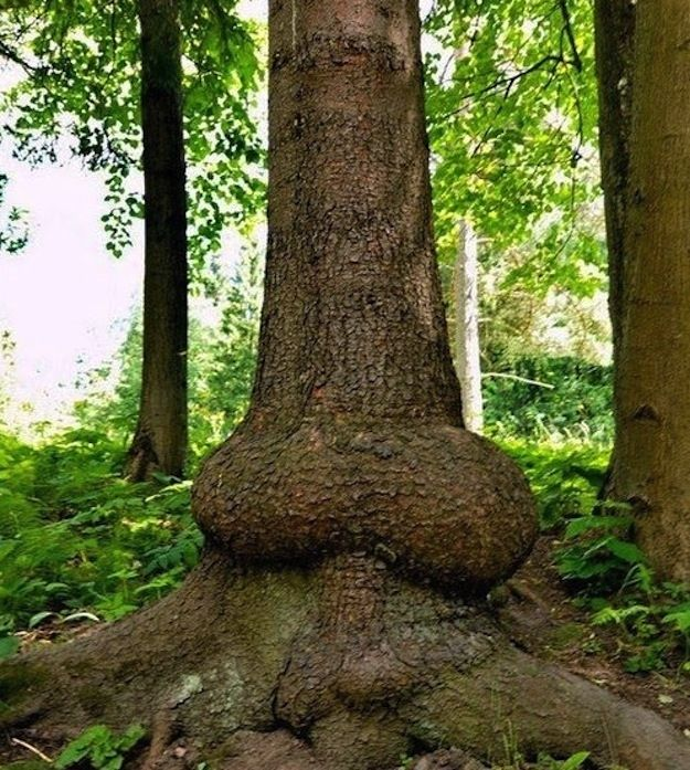 Christmas Tree San Jose: 17 Best Images About Mother Natures Weird Shapes. On