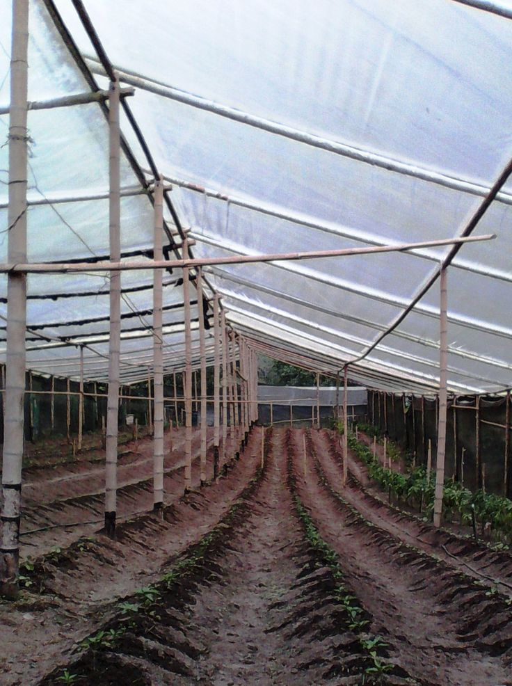 Invernadero para plantas de tomate org nico bio huerto de for Plantas para invernadero