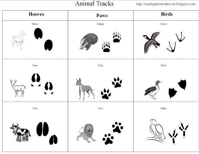 Leading Them To The Rock : Animal Study- Animal Tracks... ALSO go to http://www.altonaforest.org/documents/WinterAltonaForest.pdf for pdf of animal tracks. Could not find a way to pin this site...sorry. You could also Google Winter in Altona Forest and find the pdf file.