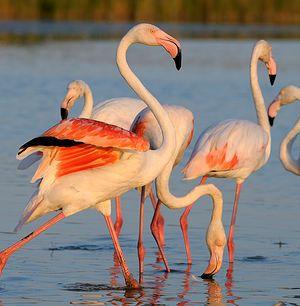 Amigurumi Flamant Rose : 295 best images about flamingo / flamant rose on Pinterest ...