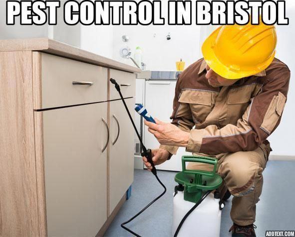 Pest Control Bristol Pesttreatment Pestcontrol Doityourselfpestcontrol Pestcontrolservices Pestrepeller Preventivepestcontr Termite Control Pest Control Pests