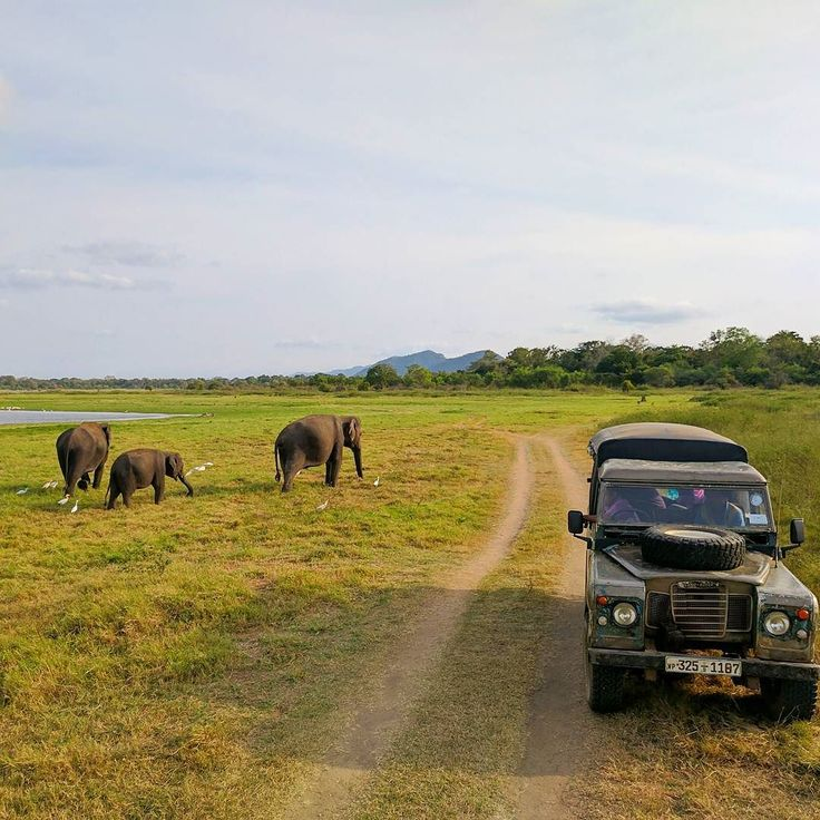 Elephant Family at Minneriya national park - Sri Lanka.  http://ift.tt/2tXlXUE  Sri Lanka Travel Tour Operator. Explore Sri Lanka with Us.  Mobile-WhatsApp-Viber 94 777854022  Photo by - @hhoskal  #srilankatrip  #train #holiday #vacation #colombo #saudi  #germany #kuwait #srilanka #sunset #saudi #jeddah #dubai #arab #fashion #uae #arabian #doha  #تركيا#Hadith#النصر# الهلال# السعوديه#الاتحاد#رمضان#دعاء