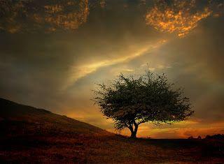 EU SOU ESPÍRITA! : BICHINHOS   Declara-se você esgotado pelos conflitos internos da instituição espírita de que se fez devotado servidor, e revela-se faminto de uma solução para os problemas que lhe atormentam a antiga casa de fé. Lutas entre companheiros e hostilidades constantes minaram o altar do templo, onde, muitas vezes, você observou a manifestação da Providência Divina... VER COMPLETO: http://rsdurantdart.blogspot.com.br/2014/07/bichinhos.html