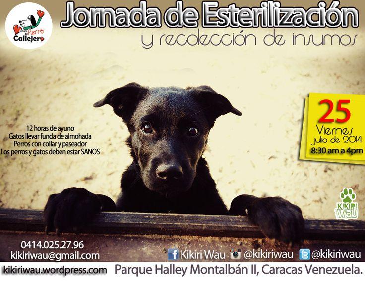 Jornada de esterilización a bajo costo para perros y gatos con o sin hogar