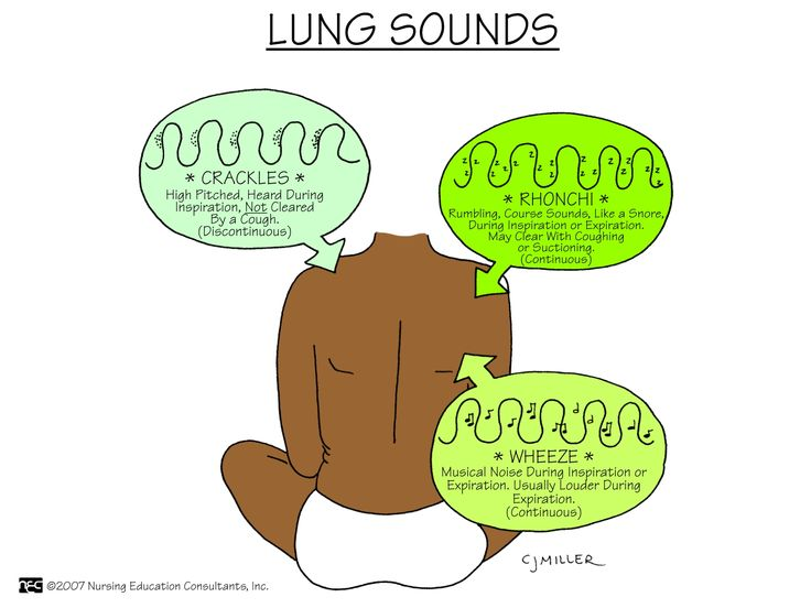 how to listen to lung sounds with a stethoscope